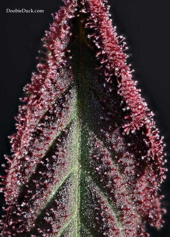 mid-blk-berry-4991-W.jpg
