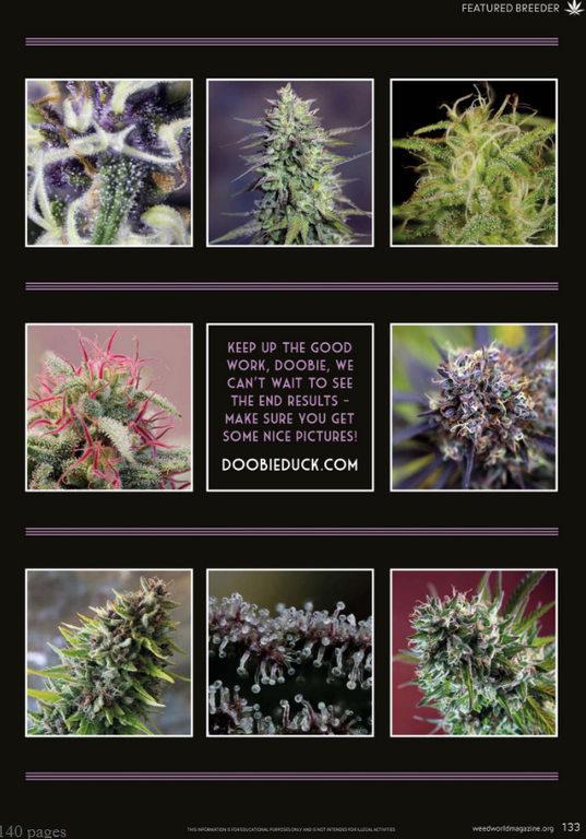 weedworld-issue-131.jpg