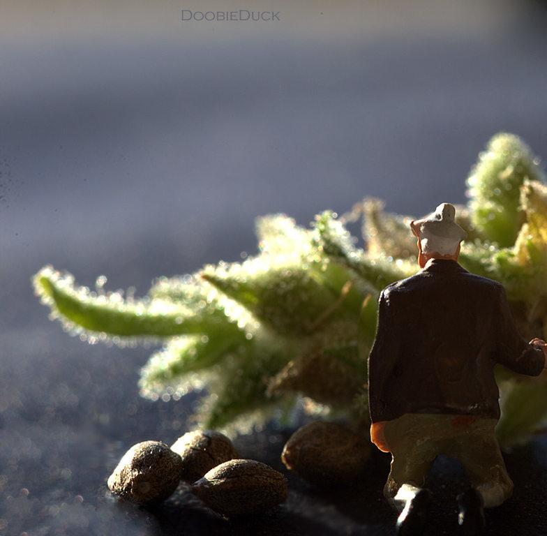 LA1A8125oldman-seed-W.jpg