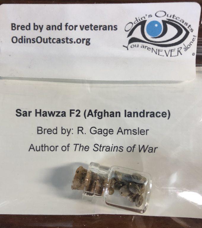 Sar Hawza F2 (Afghan Landrace)